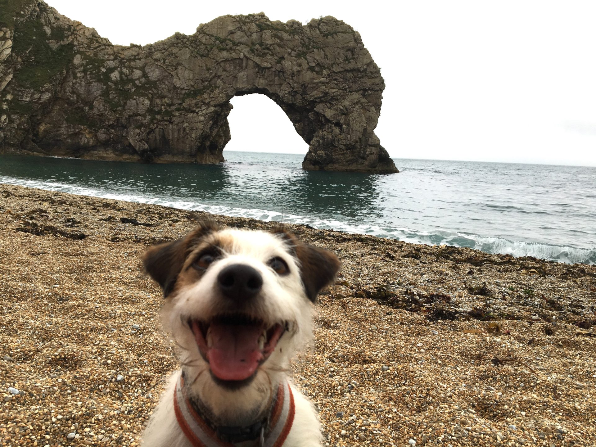 The Jurassic Coast is the perfect location to explore with your canine companion. There are plenty of dog friendly beaches you can use,
