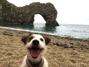 Archie at Durdle Door
