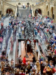 A recent timelapse image of visitors to the Natural History Museum, London, walking past the Diplodocus exhibit.