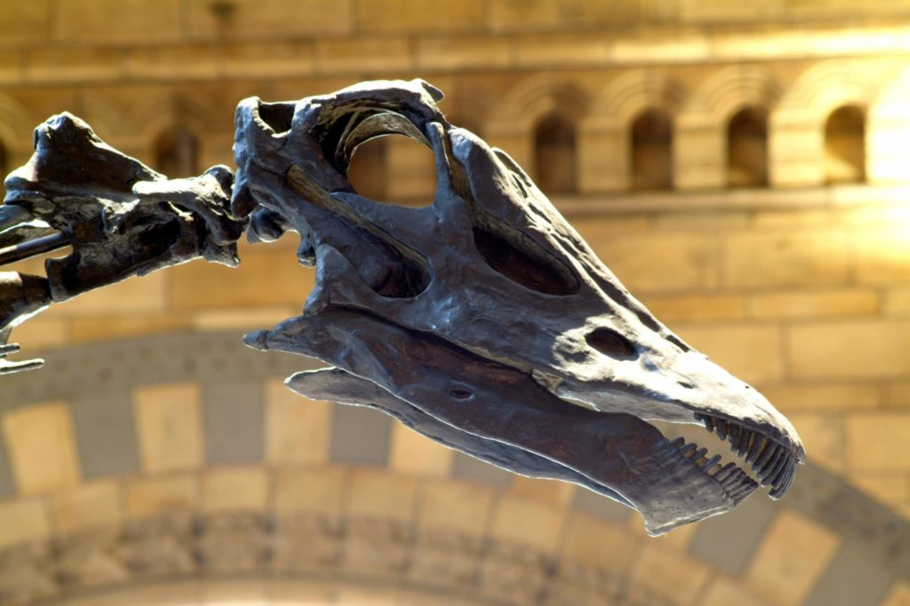 Dippy Is Coming To The Jurassic Coast Dorchester First