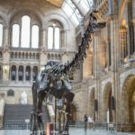 Here are 8 incredible Dippy facts that you should know before going to visit him in Dorchester