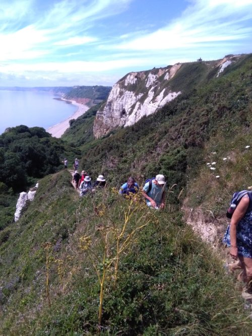 Hooken Cliff walk, beer to branscombe