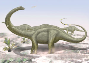 Diplodocus by Paleopeter