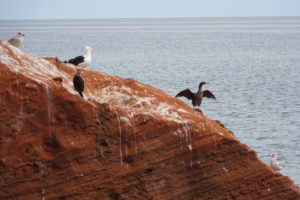 jurassic coast poetry red cliffs