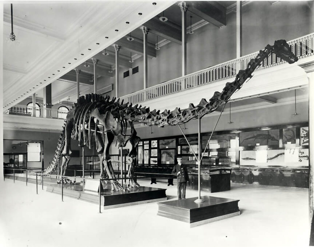 Dippy in the Carnegie Museum, Pittsburgh