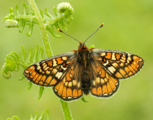 Butterfly Conservation Day