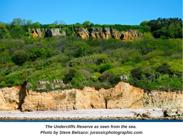 The Undercliffs Reserve as seen from the sea.