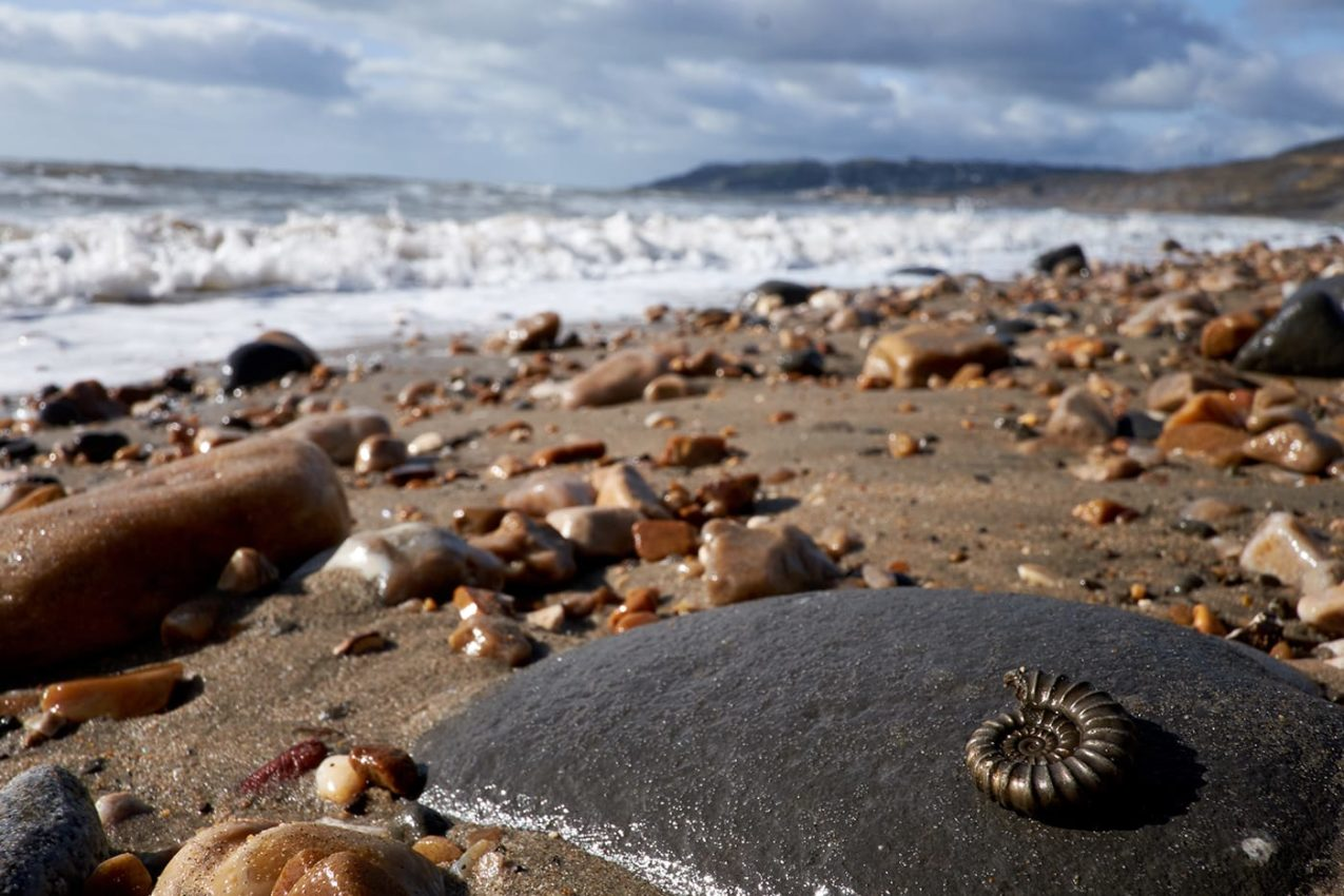 Charmouth Beach with fossils
