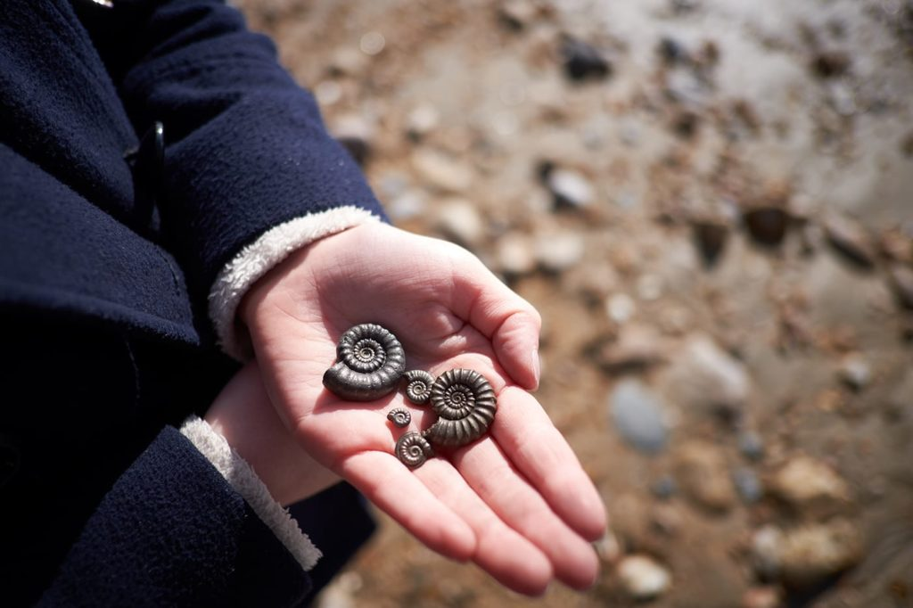 Collecting fossils on the Jurassic Coast