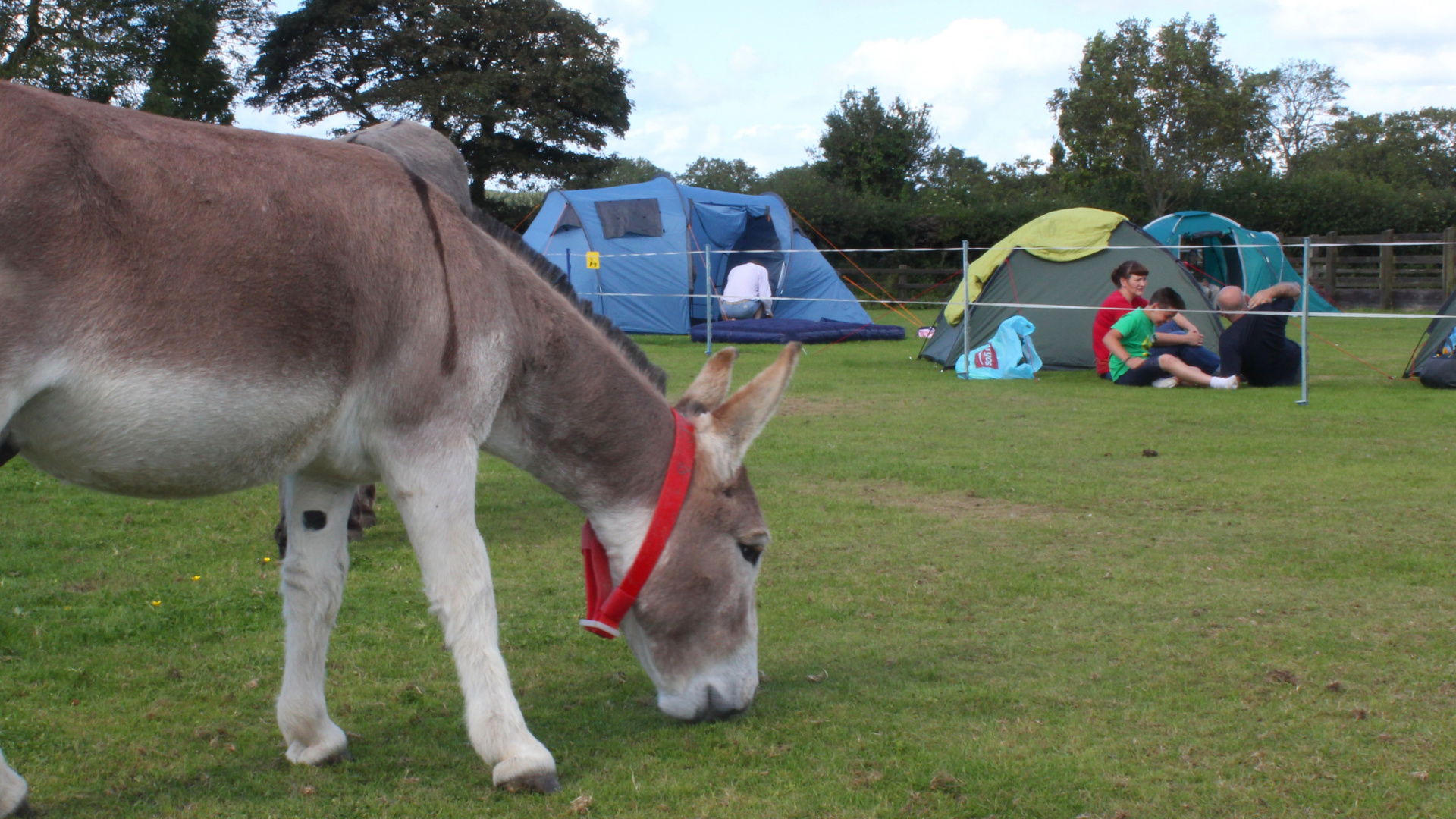 bray-and-stay-campers-and-donkey-grazing