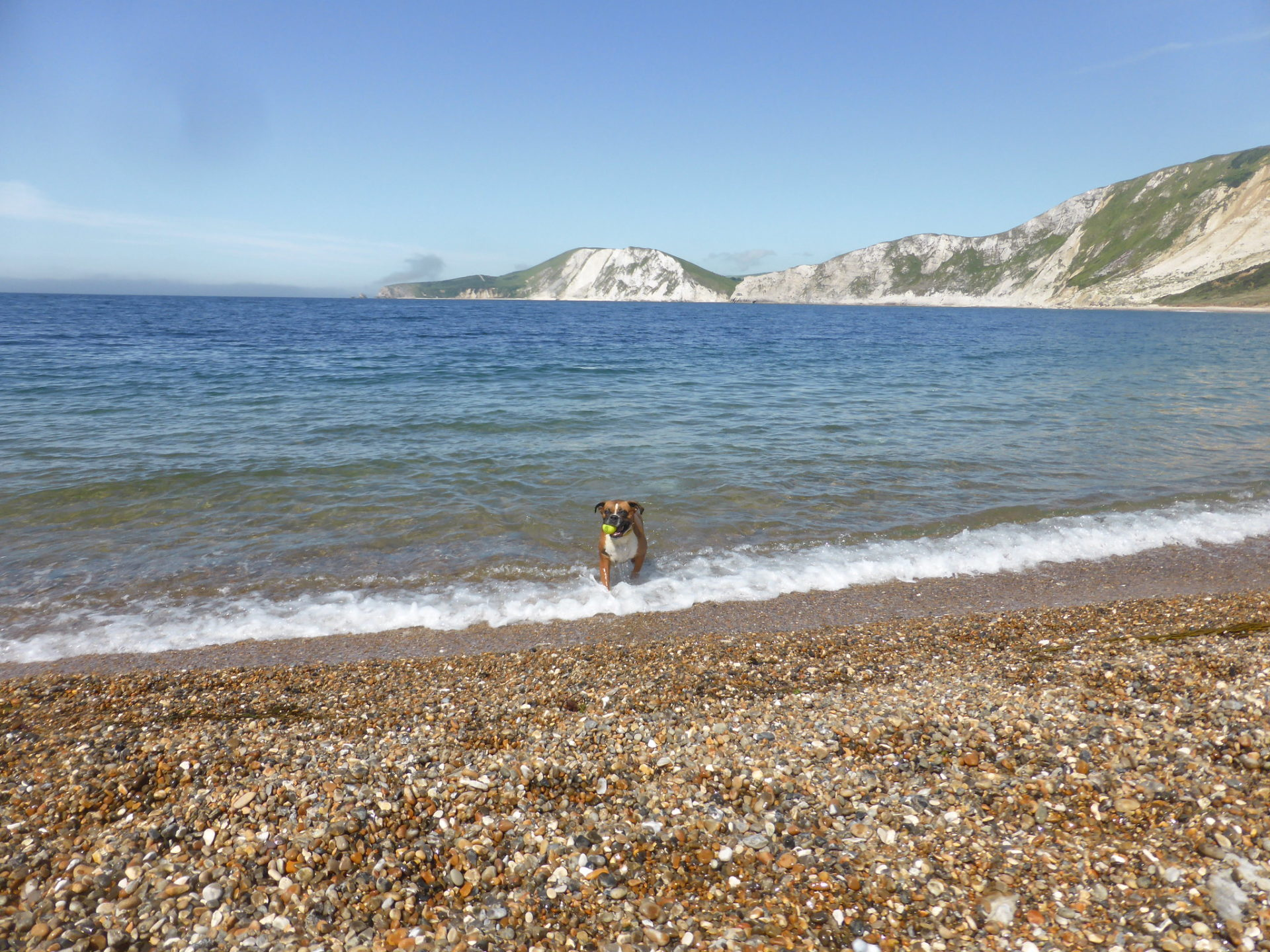 dog friendly beaches