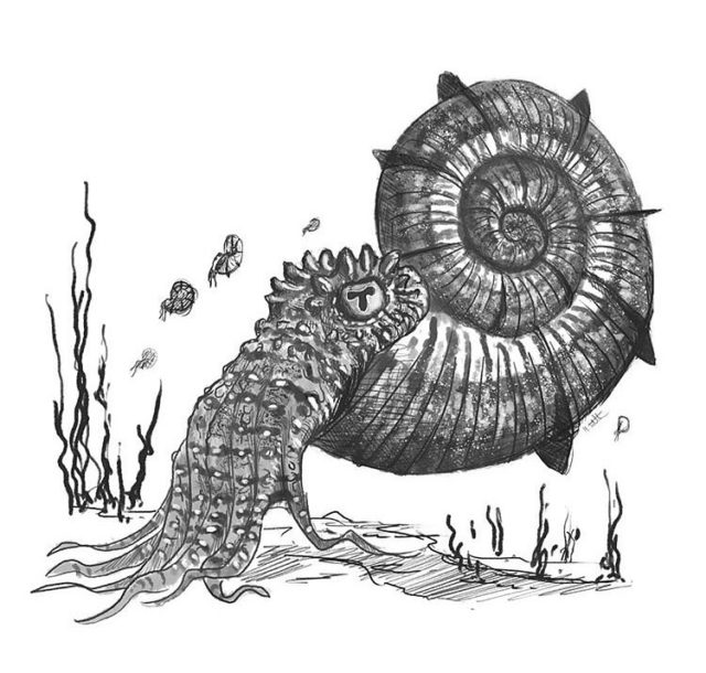 The Scelidosaurus came up trumps in the last category, just ahead of the Sauropods... so now we are onto Marine Secondary Consumers for the next category.  First up Ammonites, the Jurassic Coast symbol.  The most famous fossils from the Jurassic Coast; everyone hopes to find one of these when they visit!   Ammonites were closely related to modern nautilus and come in all shapes and sizes.  Water was pumped in and out of a spiralled shell to float or sink within the water column.   Ammonites swam backwards by squirting water through a tube in their body called a siphon.  Many long tentacles, large eyes and a sharp beak made them efficient predators.  To vote please see the link in our bio. This gives you a chance to win a stunning fossilised Jurassic seabed.  Art by Mark Witton.  #ammonite #fossil #fossils #geology #palaeontology #jurassic #jurassiccoast #science #paleontology #palentology #bigfivefossils