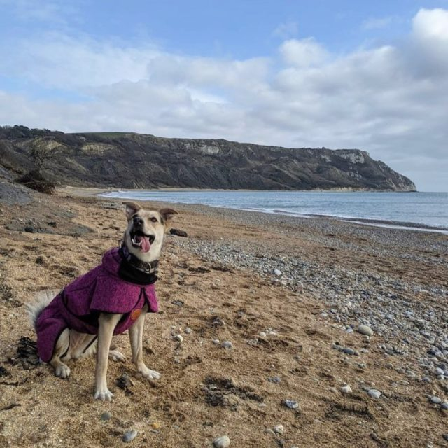 """My Jurassic Coast and practicing gratitude by @bobbytherescuedog   """"Last year when lockdown began we were waiting for our rescue dog Bobby to come to the UK to her forever home. In May she will have been with us a year.   We have spent this year exploring our home on the Jurassic Coast. Every day I am grateful that she came in to our lives and every day I am grateful for what's on my doorstep.   We have found a new love for where we live and this street dog has found a new love for the coast! We're still working on getting her in the water though...""""  #myjurassiccoast  Second photo taken at Chesil Beach."""