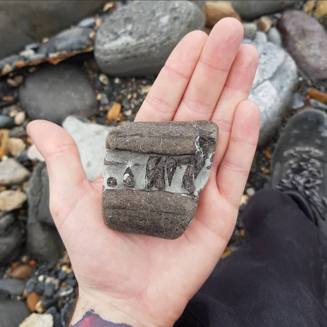 My Jurassic Coast by @paleokieran_bsc   The Jurassic Coast is an extremely important place for me, as it allows me to feel connected to palaeontology and the palaeo community. It's the one place I can visit locally to practise palaeontology but I'm even more fortunate that it happens to be an extremely unique site and home of my hero; Mary Anning.  To this day, I still can't express the feeling of excitement I get from being able to simply walk a beach with the prospect of finding treasures from millions of years ago.   Each and every visit is always different, as you never know what you're going to find.  #myjurassiccoast   To see the video Kieran filmed with Dean Lomax see our IGTV 'Candid Fossil Walk'